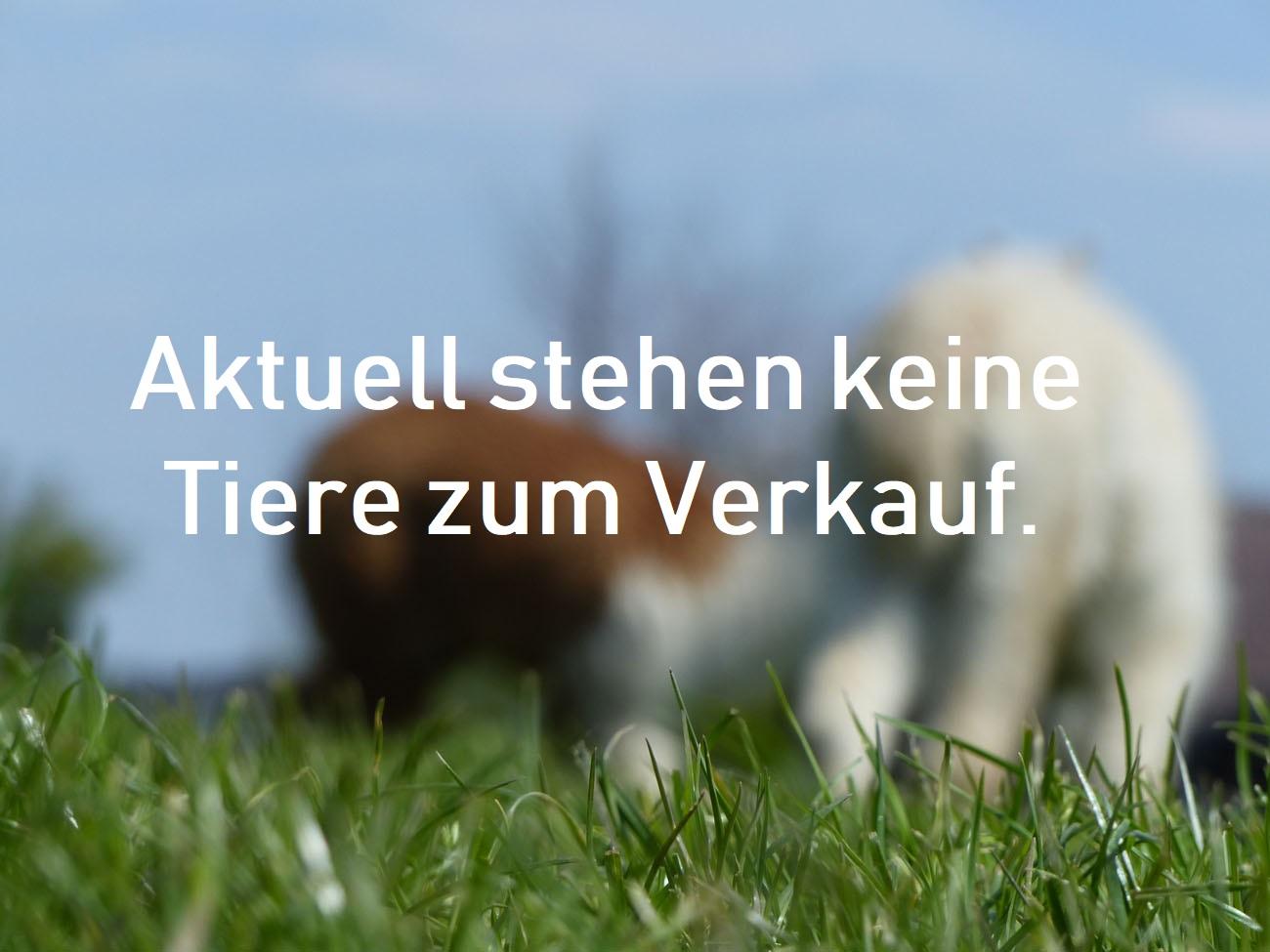 Tegelfeld Alpakas - Verkaufstiere