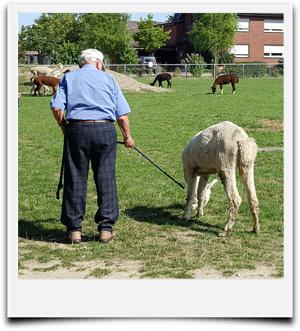 Senioren auf der Alpakafarm